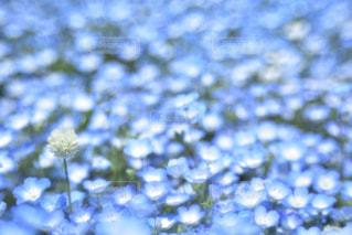 自然の写真・画像素材[2016058]