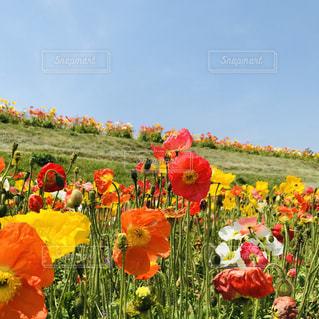 野原の色とりどりの花のグループの写真・画像素材[2202202]