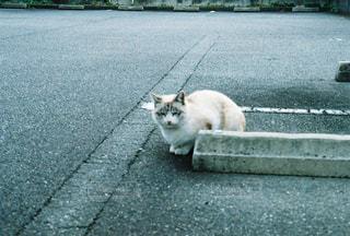 ネコの写真・画像素材[2027719]