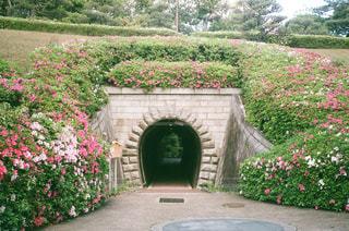 ツツジに囲まれたトンネルの写真・画像素材[2078004]
