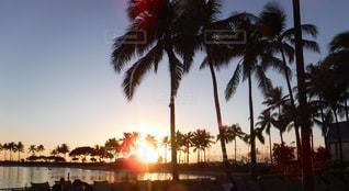 ヤシの木のシルエットが美しいリゾート地の夕暮れの写真・画像素材[2187729]