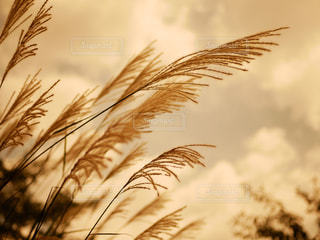 秋の風景の写真・画像素材[2357034]