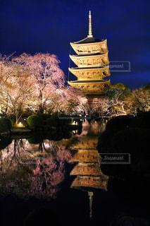 東寺夜桜ライトアップの写真・画像素材[2019652]