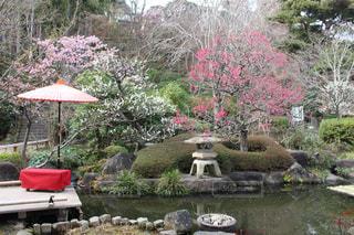 庭園の写真・画像素材[2051051]
