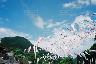 泳げ鯉のぼりの写真・画像素材[2300874]