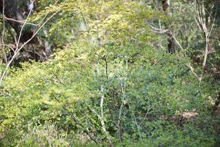 東京・目黒の自然教育園でのスナップの写真・画像素材[2026845]