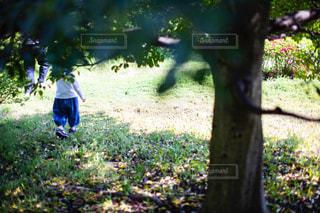 公園の子どもの写真・画像素材[2060583]