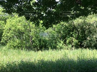 緑いっぱいの公園の写真・画像素材[2150709]