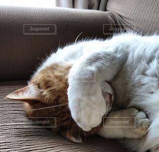 ソファーで寝ている猫の写真・画像素材[2124157]