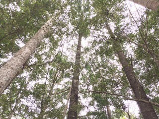 No.67625 森林