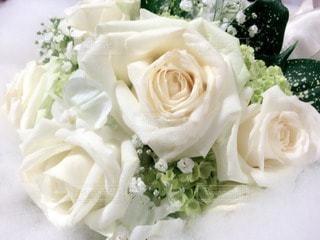 花の写真・画像素材[76781]