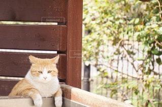 猫の写真・画像素材[76736]