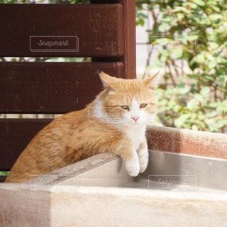 猫の写真・画像素材[76739]