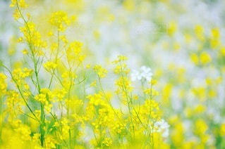 自然の写真・画像素材[80183]