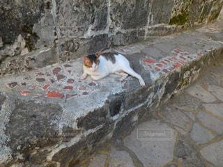 猫の写真・画像素材[2032073]