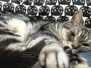 猫がお互いの上に横たわっているの写真・画像素材[2087649]