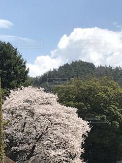 桜の写真・画像素材[2041061]