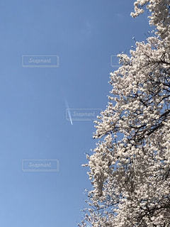 桜と空の写真・画像素材[2041062]