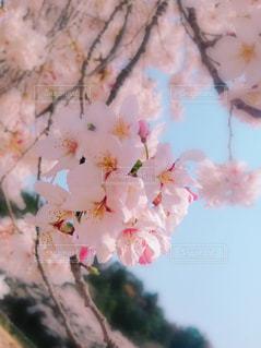 春の写真・画像素材[2025137]