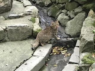 猫の写真・画像素材[2029795]