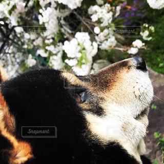 犬の写真・画像素材[2033109]