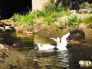 川遊び、大はしゃぎの写真・画像素材[2050341]