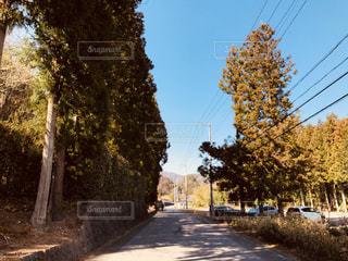 殺風景な田舎の道路。の写真・画像素材[2026500]