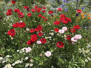 花の写真・画像素材[2032380]