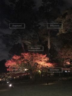 夜空と光輝く紅葉の写真・画像素材[2079445]