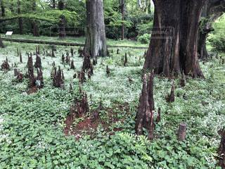 フォレスト内のツリーの写真・画像素材[2081566]