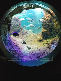 魚の写真・画像素材[680516]