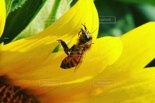 黄色い花の写真・画像素材[2106121]