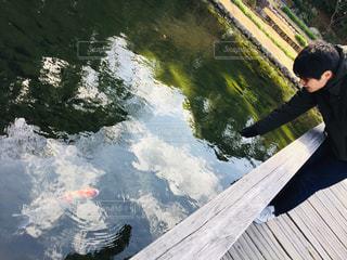 池の鯉に餌やり夏の訪れの写真・画像素材[2028880]