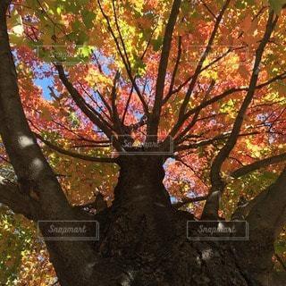 自然の写真・画像素材[77078]