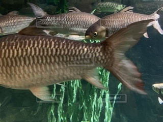 クアラルンプールKLCC水族館の写真・画像素材[2031147]