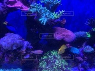クアラルンプールKLCC水族館の写真・画像素材[2031164]