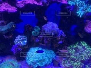 クアラルンプールKLCC水族館の写真・画像素材[2031169]