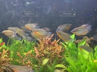 クアラルンプールのKLCC水族館の写真・画像素材[2031173]