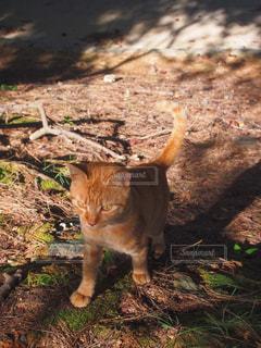 猫の写真・画像素材[234955]