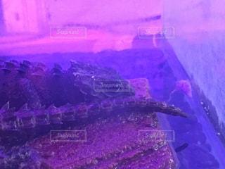 尻尾の写真・画像素材[2031902]