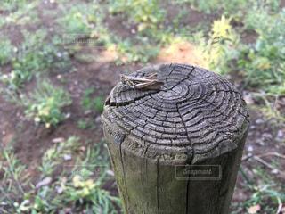 木の写真・画像素材[2038548]