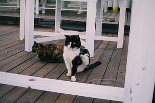 猫の写真・画像素材[2034974]