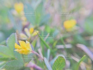 黄色い花の写真・画像素材[2049722]