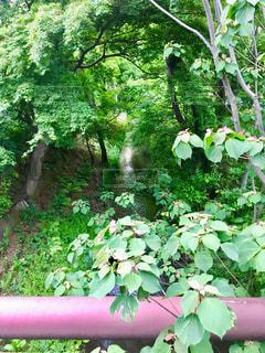 小さい川の写真・画像素材[2085403]