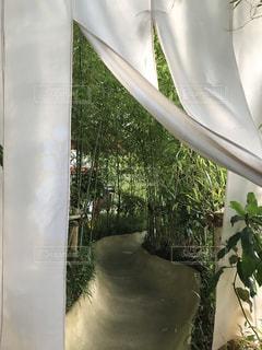 来宮神社 大楠から神社への写真・画像素材[2886299]