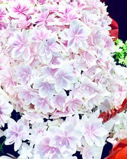 紫陽花の写真・画像素材[2096226]
