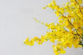 花のクローズアップの写真・画像素材[3161862]