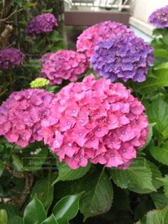 花の写真・画像素材[2035363]