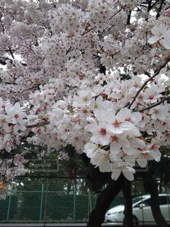 花の写真・画像素材[2036174]