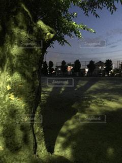 大きな樹の影の写真・画像素材[2093197]